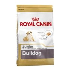 BULLDOG INGLES JUNIOR