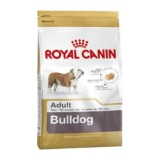 BULLDOG INGLES ADULT