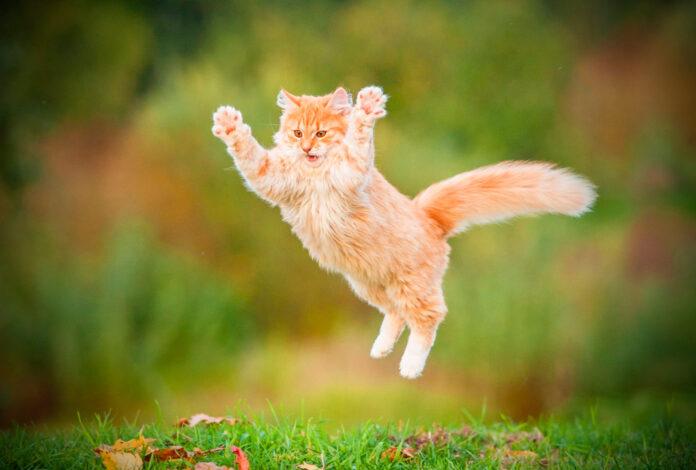 ¡DESCUBRE! Por qué SE DICE que el gato TIENE 7 VIDAS ¿Un mito?